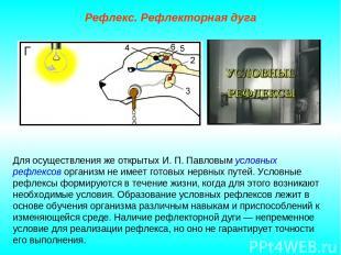 Рефлекс. Рефлекторная дуга Для осуществления же открытых И. П. Павловым условных