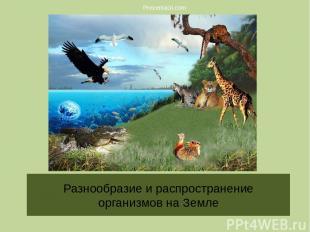 Разнообразие и распространение организмов на Земле Prezentacii.com