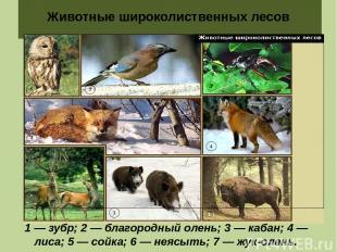 Животные широколиственных лесов 1 — зубр; 2 — благородный олень; 3 — кабан; 4 —