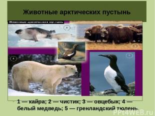 Животные арктических пустынь 1 — кайра; 2 — чистик; 3 — овцебык; 4 — белый медве