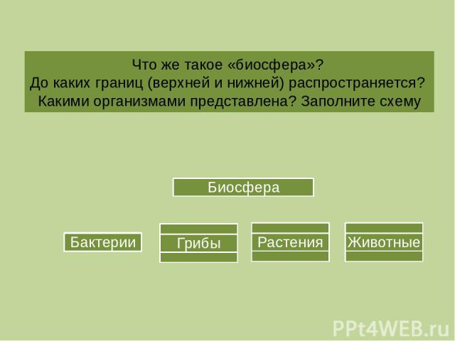 Что же такое «биосфера»? До каких границ (верхней и нижней) распространяется? Какими организмами представлена? Заполните схему Биосфера Бактерии Биосфера Бактерии Грибы Растения Животные