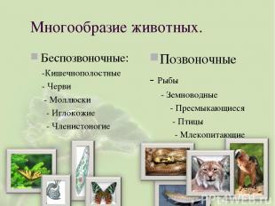 Многообразие животных. Беспозвоночные: -Кишечнополостные - Черви - Моллюски - Иг