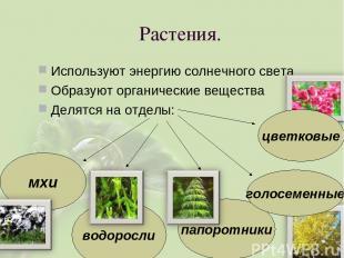 Растения. Используют энергию солнечного света Образуют органические вещества Дел