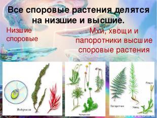Все споровые растения делятся на низшие и высшие. Низшие споровые Мхи, хвощи и п