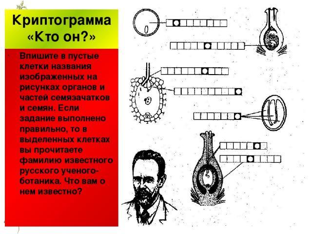 Криптограмма «Кто он?» Впишите в пустые клетки названия изображенных на рисунках органов и частей семязачатков и семян. Если задание выполнено правильно, то в выделенных клетках вы прочитаете фамилию известного русского ученого-ботаника. Что вам о н…