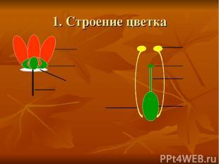 1. Строение цветка