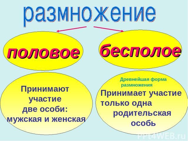 половое бесполое Принимают участие две особи: мужская и женская Древнейшая форма размножения Принимает участие только одна родительская особь