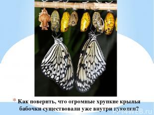 Как поверить, что огромные хрупкие крылья бабочки существовали уже внутри куколк