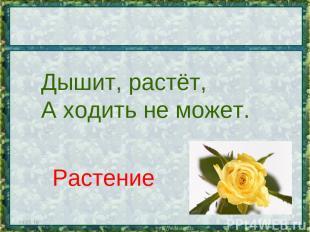 * * Дышит, растёт, А ходить не может. Растение