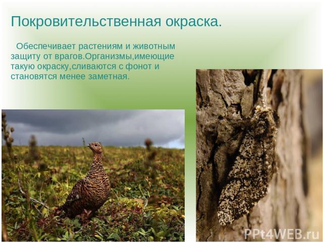 Покровительственная окраска. Обеспечивает растениям и животным защиту от врагов.Организмы,имеющие такую окраску,сливаются с фонот и становятся менее заметная.