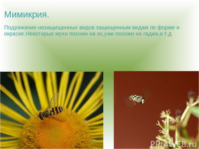 Мимикрия. Подражание незащищенных видов защищенным видам по форме и окраске.Некоторые мухи похожи на ос,ужи похожи на гадюк,и т.д