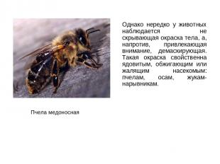 Однако нередко у животных наблюдается не скрывающая окраска тела, а, напротив, п