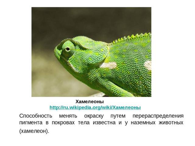 Способность менять окраску путем перераспределения пигмента в покровах тела известна и у наземных животных (хамелеон). Хамелеоны http://ru.wikipedia.org/wiki/Хамелеоны
