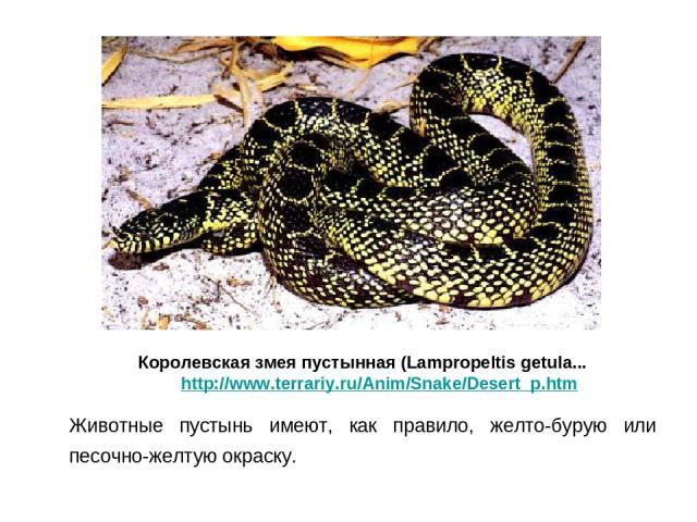Животные пустынь имеют, как правило, желто-бурую или песочно-желтую окраску. Королевская змея пустынная (Lampropeltis getula... http://www.terrariy.ru/Anim/Snake/Desert_p.htm