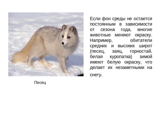 Если фон среды не остается постоянным в зависимости от сезона года, многие животные меняют окраску. Например, обитатели средних и высоких широт (песец, заяц, горностай, белая куропатка) зимой имеют белую окраску, что делает их незаметными на снегу. Песец