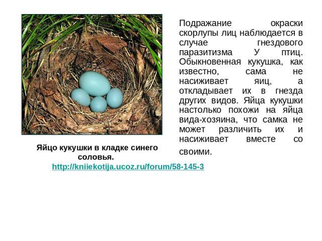 Подражание окраски скорлупы лиц наблюдается в случае гнездового паразитизма У птиц. Обыкновенная кукушка, как известно, сама не насиживает яиц, а откладывает их в гнезда других видов. Яйца кукушки настолько похожи на яйца вида-хозяина, что самка не …