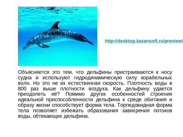 Объясняется это тем, что дельфины пристраиваются к носу судна и используют гидродинамическую силу корабельных волн. Но это не их естественная скорость. Плотность воды в 800 раз выше плотности воздуха. Как дельфину удается преодолеть её? Помимо други…
