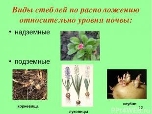 Виды стеблей по расположению относительно уровня почвы: надземные подземные луко