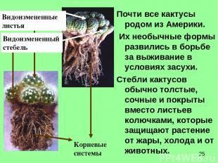 Почти все кактусы родом из Америки. Их необычные формы развились в борьбе за выж