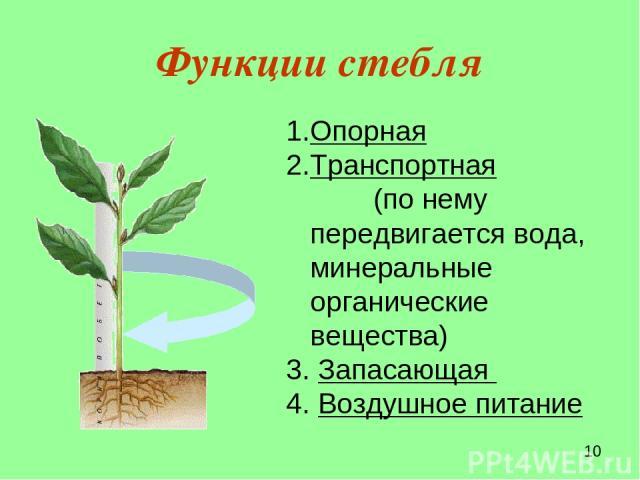 Функции стебля Опорная Транспортная (по нему передвигается вода, минеральные органические вещества) Запасающая Воздушное питание