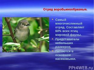 Отряд воробьинообразные. Самый многочисленный отряд. Составляет 60% всех птиц ми