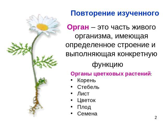 Орган – это часть живого организма, имеющая определенное строение и выполняющая конкретную функцию Органы цветковых растений: Корень Стебель Лист Цветок Плод Семена Повторение изученного