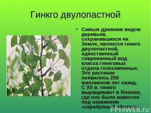 Гинкго двулопастной Самым древним видом деревьев, сохранившихся на Земле, являет