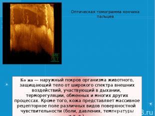 Ко жа— наружный покров организма животного, защищающий тело от широкого спектра
