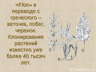 «Klon» в переводе с греческого – веточка, побег, черенок. Клонирование растений