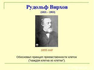 """Рудольф Вирхов 1855 год Обосновал принцип преемственности клеток (""""каждая клетка"""