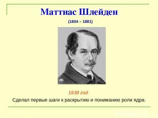 Маттиас Шлейден 1838 год Сделал первые шаги к раскрытию и пониманию роли ядра. (