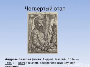 Четвертый этап Андре ас Веза лий (часто: Андрей Везалий; 1514— 1564 )— врач и