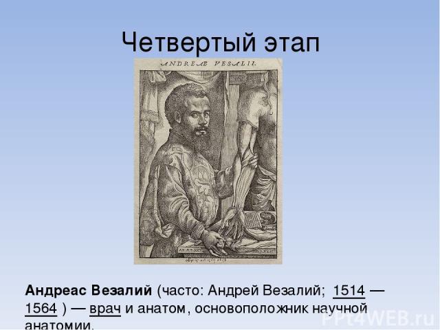 Четвертый этап Андре ас Веза лий (часто: Андрей Везалий; 1514— 1564 )— врач и анатом, основоположник научной анатомии.