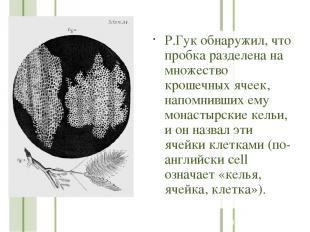 Р.Гук обнаружил, что пробка разделена на множество крошечных ячеек, напомнивших