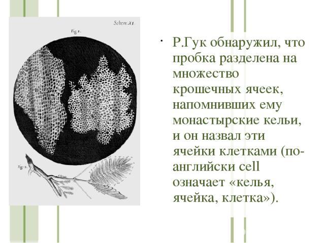 Р.Гук обнаружил, что пробка разделена на множество крошечных ячеек, напомнивших ему монастырские кельи, и он назвал эти ячейки клетками (по-английски cell означает «келья, ячейка, клетка»).