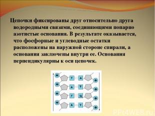 Цепочки фиксированы друг относительно друга водородными связями, соединяющими по
