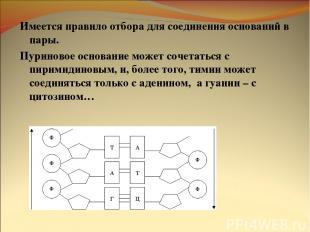 Имеется правило отбора для соединения оснований в пары. Пуриновое основание може