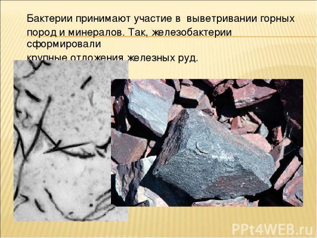 Бактерии принимают участие в выветривании горных пород и минералов. Так, железобактерии сформировали крупные отложения железных руд.