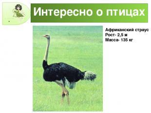 Интересно о птицах Африканский страус Рост- 2,5 м Масса- 135 кг