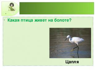 Какая птица живет на болоте? Цапля