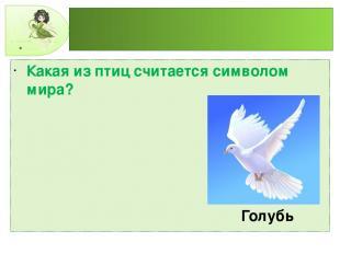 Какая из птиц считается символом мира? Голубь
