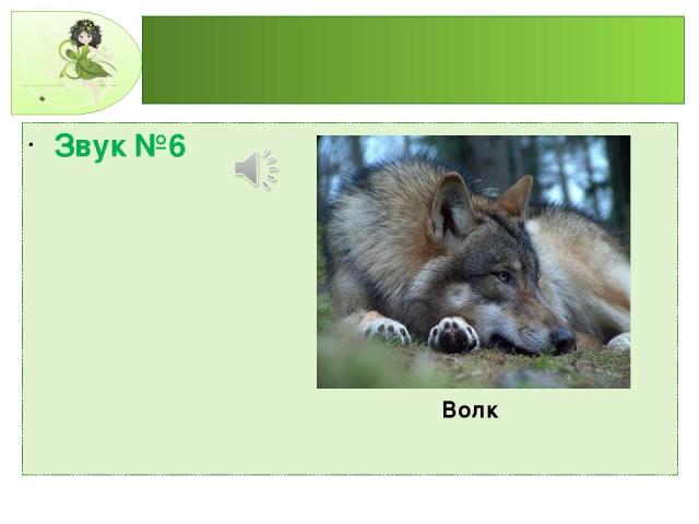 Звук №6 Волк