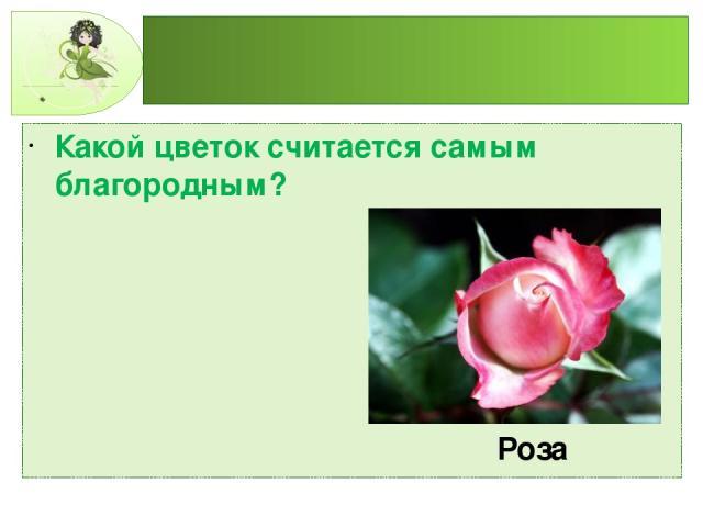 Какой цветок считается самым благородным? Роза
