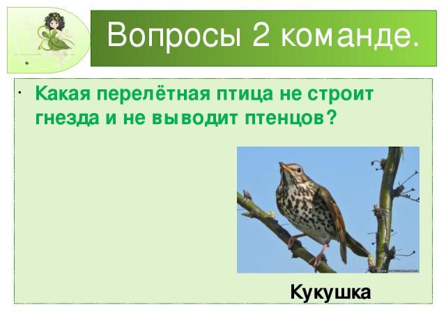 Вопросы 2 команде. Какая перелётная птица не строит гнезда и не выводит птенцов? Кукушка