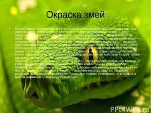 Окраска змей Незаметному появлению змей во многом способствует покровительственн