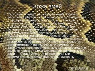 Кожа змей Тело змеи покрыто чешуйчатой кожей. Вопреки расхожему мнению (из-за во