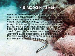Яд морских змей Морские змеи имеют один из наиболее сильных змеиных ядов вообще.