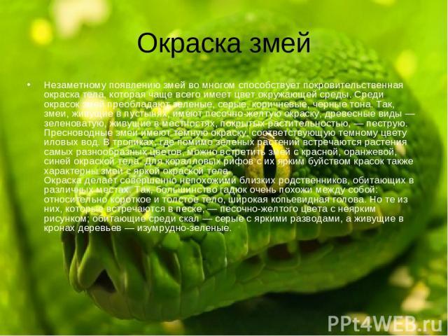 Окраска змей Незаметному появлению змей во многом способствует покровительственная окраска тела, которая чаще всего имеет цвет окружающей среды. Среди окрасок змей преобладают зеленые, серые, коричневые, черные тона. Так, змеи, живущие в пустынях, и…