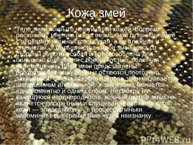Кожа змей Тело змеи покрыто чешуйчатой кожей. Вопреки расхожему мнению (из-за возможной путаницы змей с червями) змеиная кожа сухая, а не влажная и слизистая. У большинства видов змей кожа со стороны живота особая и приспособлена для большего сцепле…