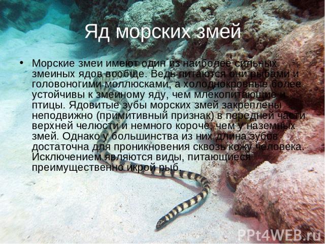 Яд морских змей Морские змеи имеют один из наиболее сильных змеиных ядов вообще. Ведь питаются они рыбами и головоногими моллюсками, а холоднокровные более устойчивы к змеиному яду, чем млекопитающие и птицы. Ядовитые зубы морских змей закреплены не…